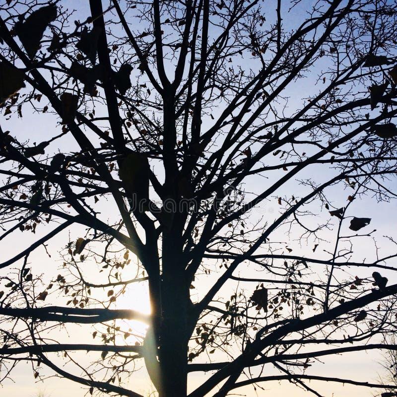 Arbre de lever de soleil photo libre de droits