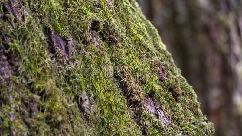 Arbre de lichen de fond vieux photographie stock