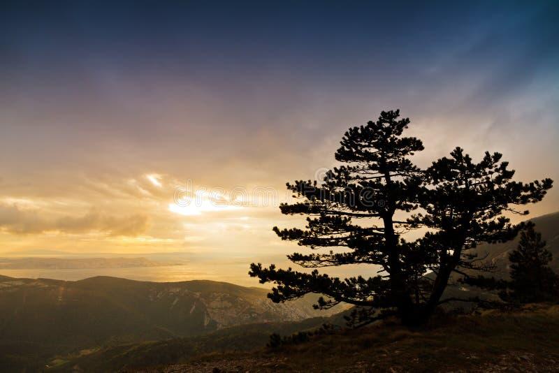 Arbre de montagne de coucher du soleil photographie stock libre de droits