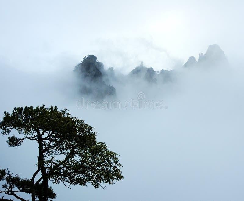 arbre de montagne de regain photo libre de droits