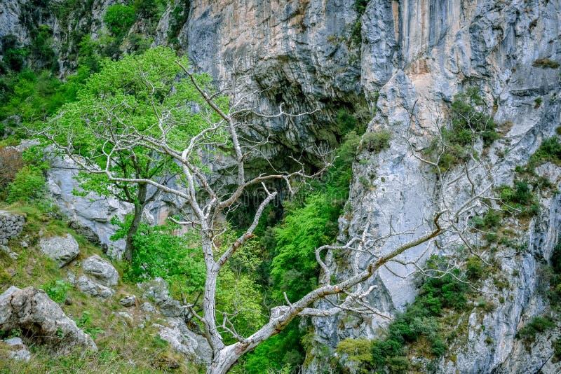Arbre de mort dans l'itinéraire de trekking de soins, Asturies photographie stock libre de droits