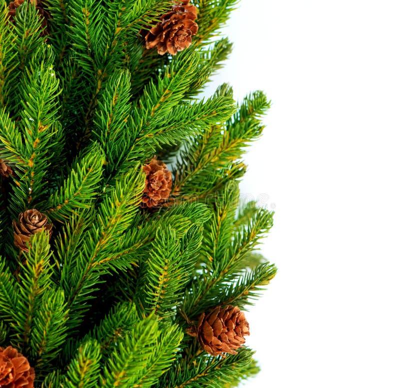Arbre de Noël avec des cônes image libre de droits