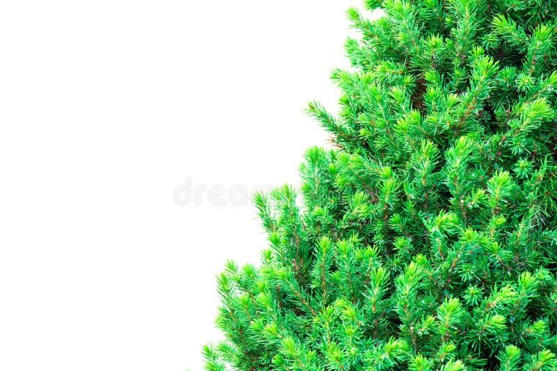 Arbre de Noël d'isolement sur un fond blanc sans toutes décorations images stock