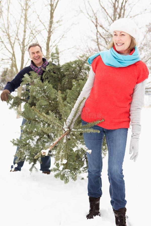 Arbre de Noël de transport de couples aînés dans la neige images stock
