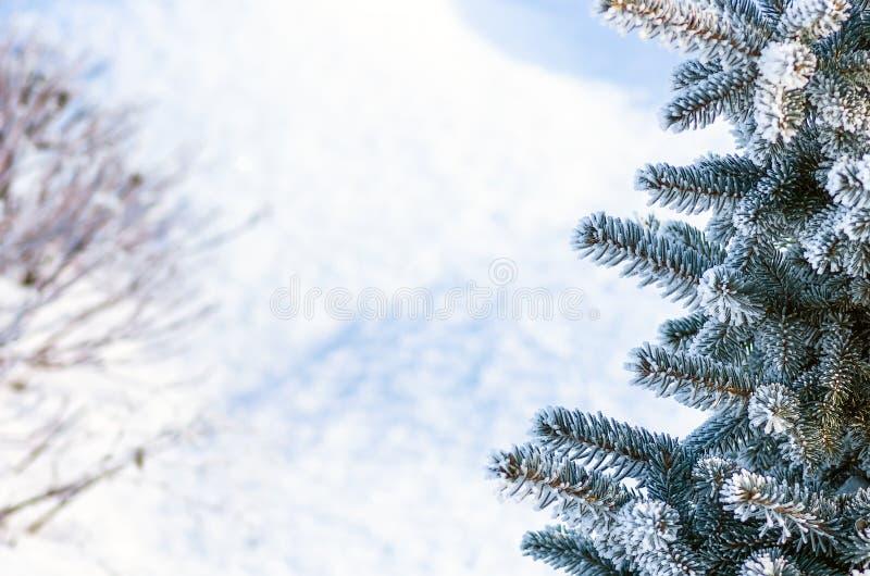 Arbre de No?l, arbre de sapin dans la neige et gel?e image libre de droits