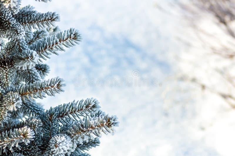 Arbre de No?l, arbre de sapin dans la neige et gel?e images stock