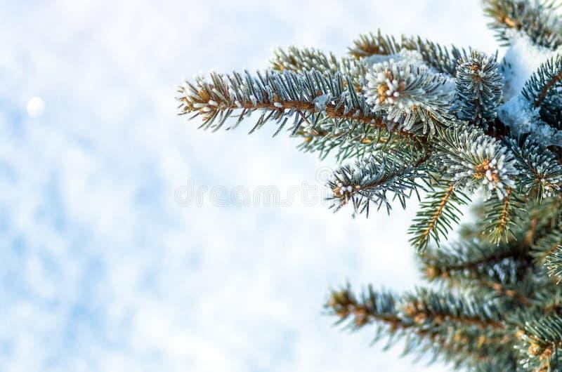 Arbre de No?l, arbre de sapin dans la neige et gel?e photo stock