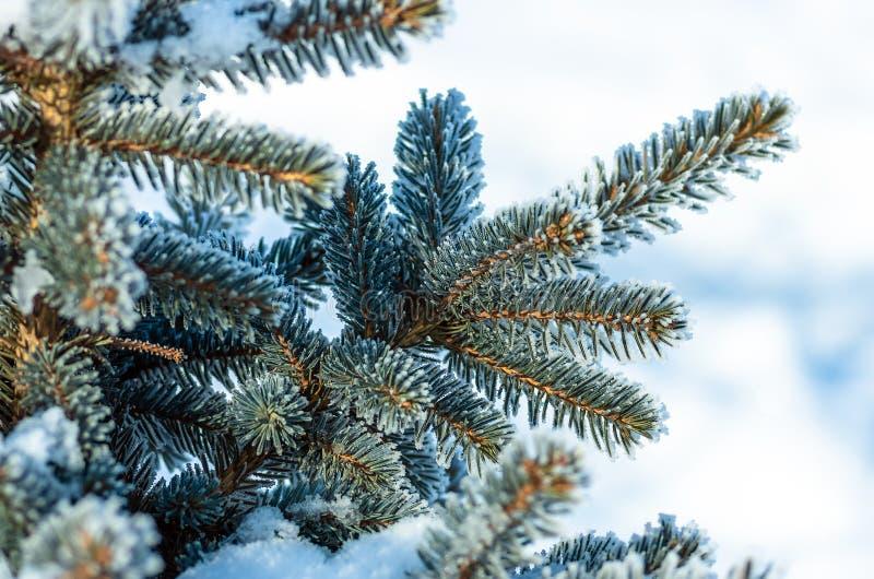 Arbre de No?l, arbre de sapin dans la neige et gel?e photographie stock libre de droits