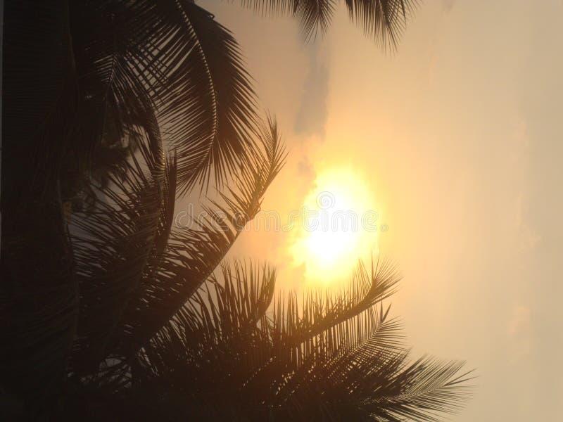 Arbre de noix de coco de coucher du soleil beau image libre de droits