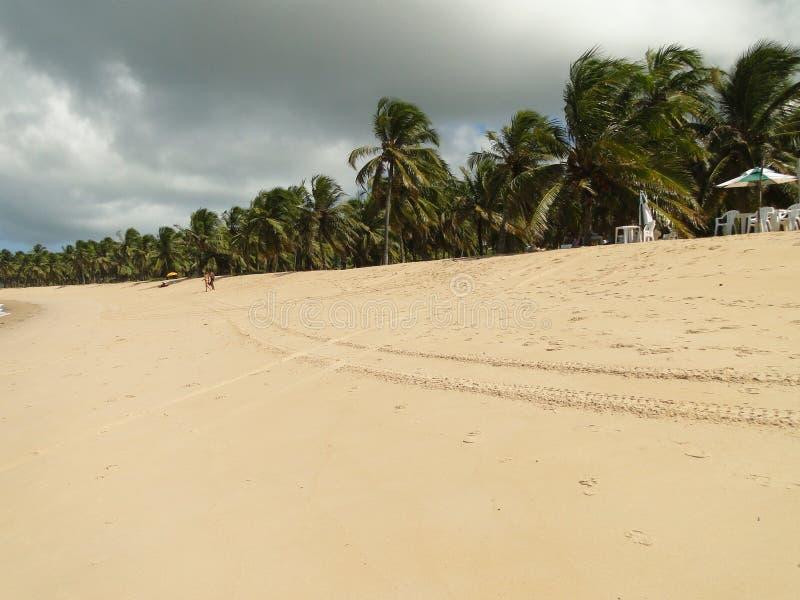 Arbre de noix de coco en plage brésilienne photo libre de droits