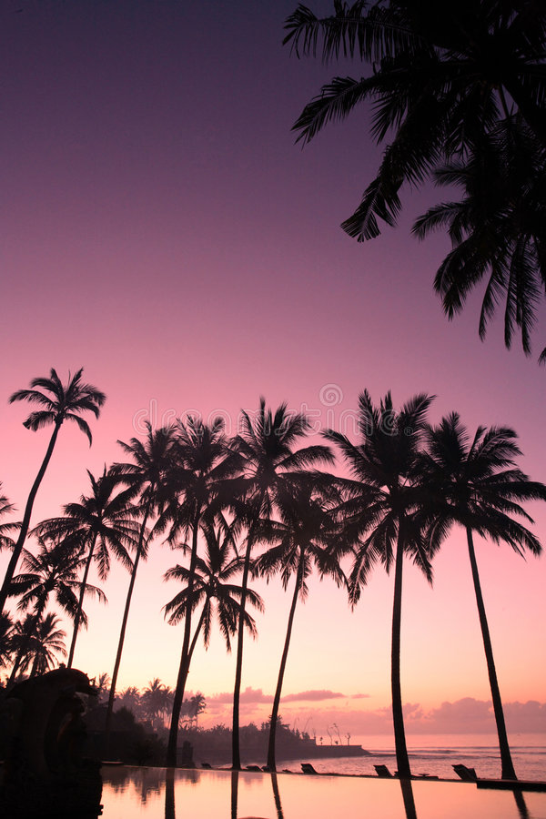 Arbre de noix de coco au lever de soleil image stock