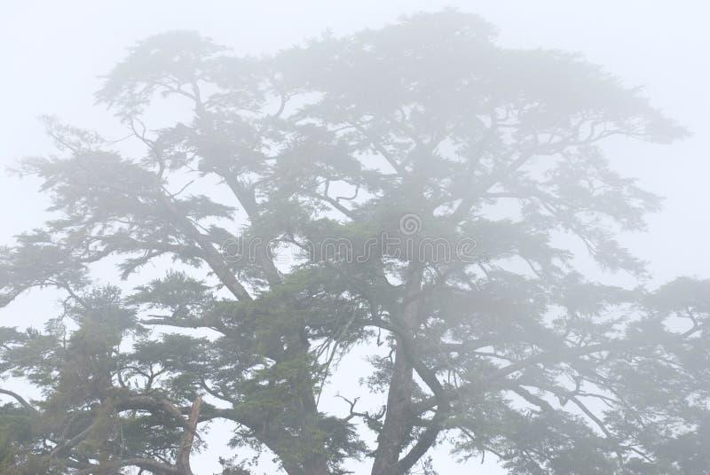 Arbre de pin dans la forêt avec le regain photographie stock