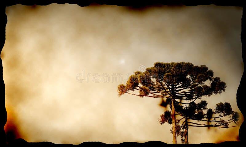 Arbre de pin dans la toile photo libre de droits