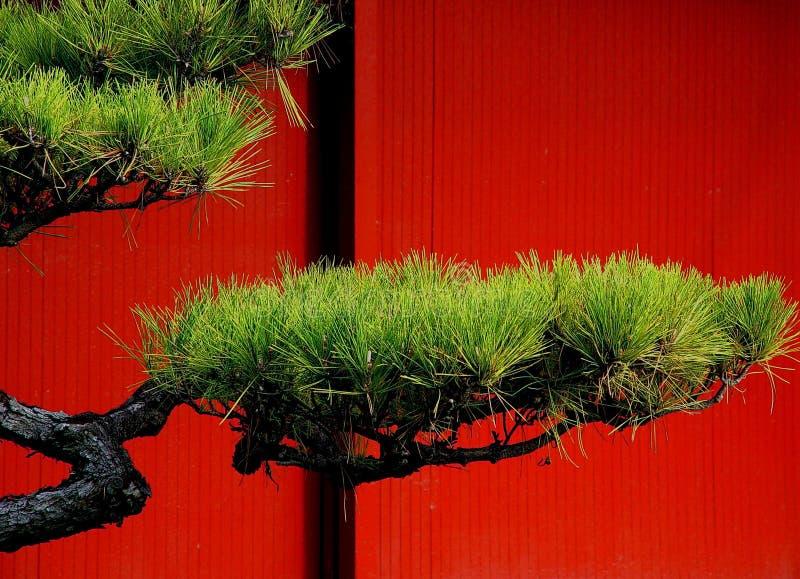Download Arbre de pin japonais image stock. Image du culture, vert - 84853