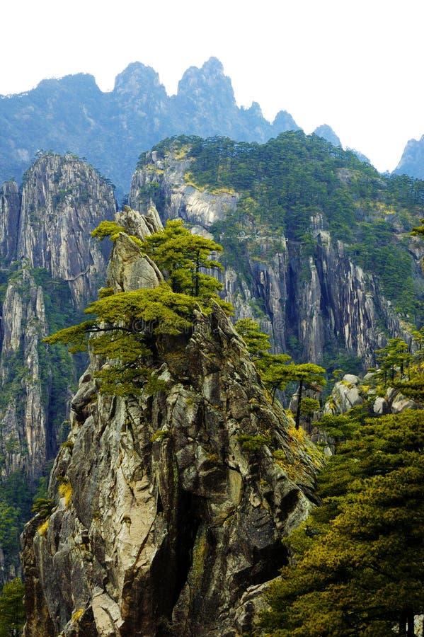 Arbre de pin sur la montagne photos libres de droits