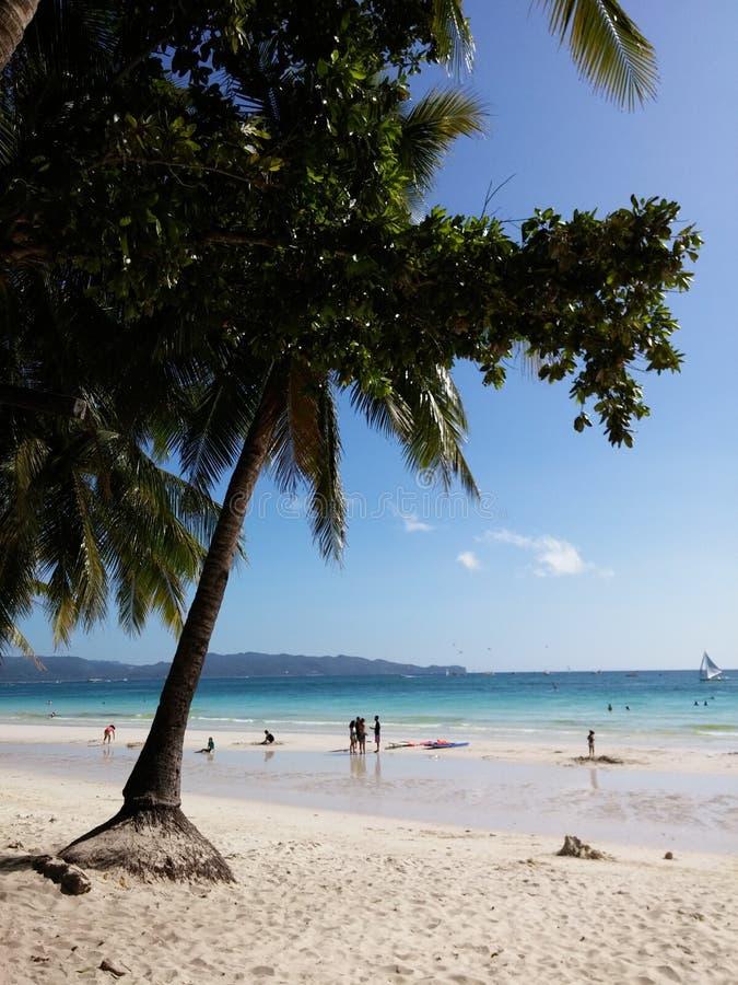 Arbre de plage photo stock