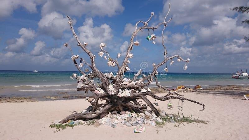Arbre de plage image libre de droits