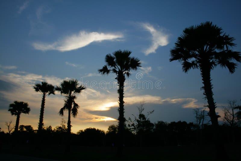 Arbre de Plam avec le coucher du soleil d'isolement photos libres de droits