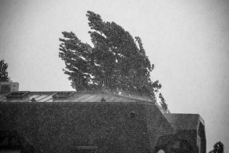 Arbre de pluie de ville de temps orageux image stock