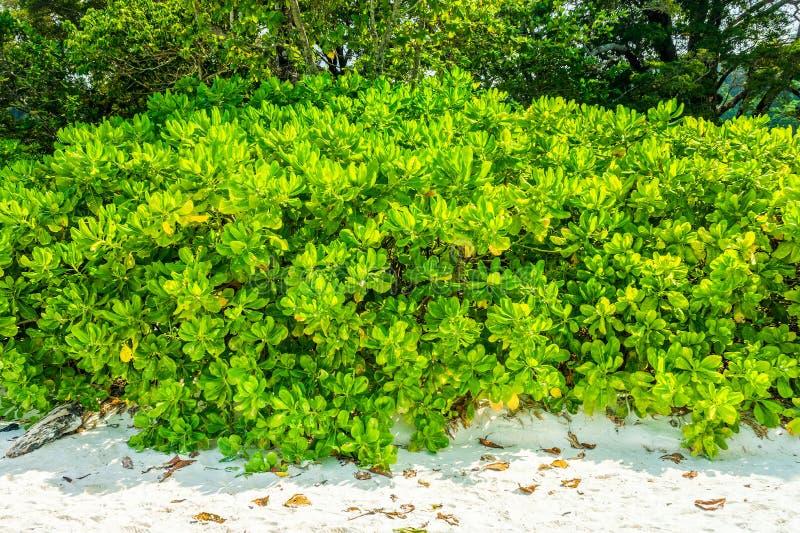 Arbre de poison de poisson de mer sur la plage de sable images libres de droits