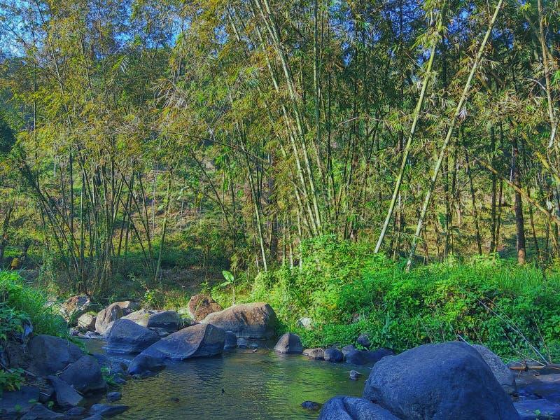 Arbre de rivière et de bambous image stock