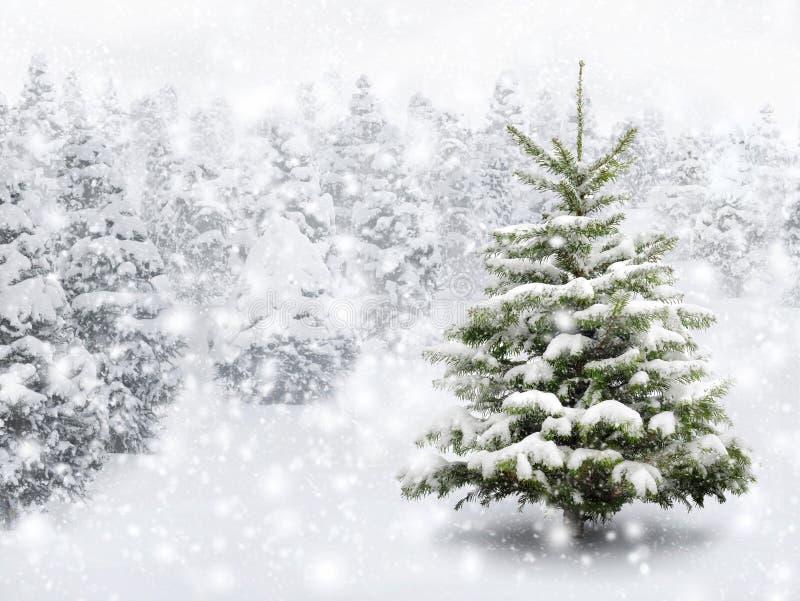 Arbre de sapin dans la neige épaisse photo libre de droits