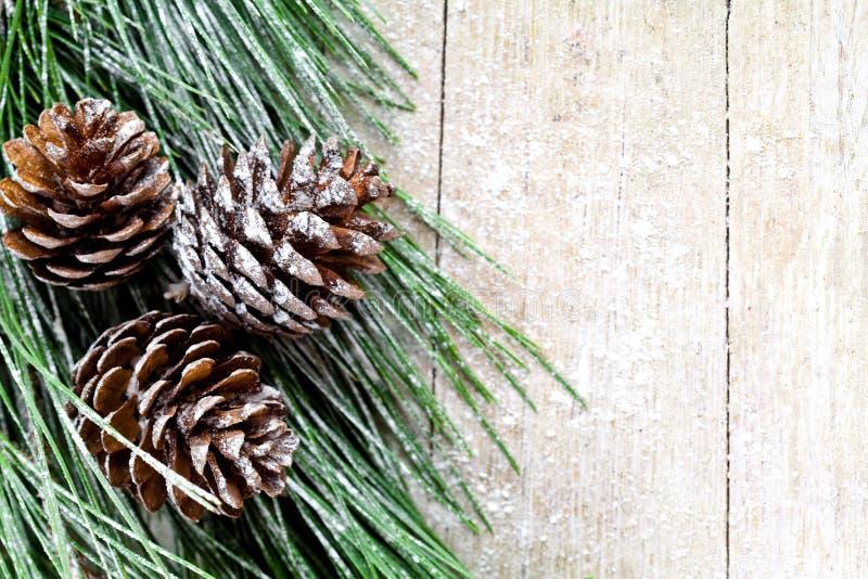Arbre de sapin de Noël avec des pinecones photographie stock libre de droits