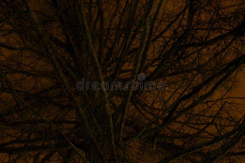 Arbre de sapin effrayant devant le ciel nocturne orange photos stock