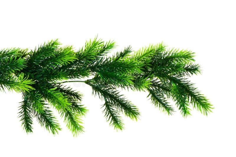arbre de sapin proche de branchement vers le haut photo libre de droits