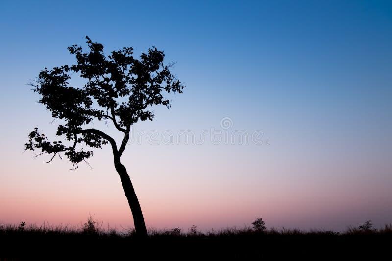 Arbre de silhouette avec le ciel de coucher du soleil image stock