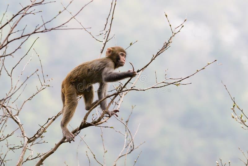 arbre de singe photos libres de droits