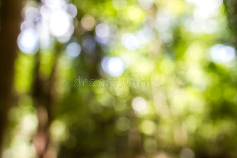 Arbre de tache floue dans la forêt photographie stock
