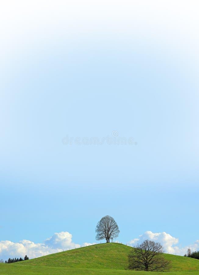 Arbre de tilleul isolé au sommet, ciel bleu de gradient image libre de droits