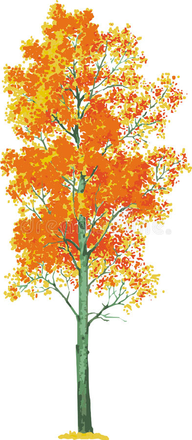 arbre de tremble. Vecteur illustration stock