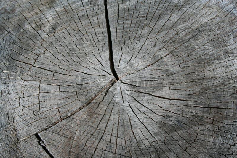 arbre de tronçon de boucles photos libres de droits