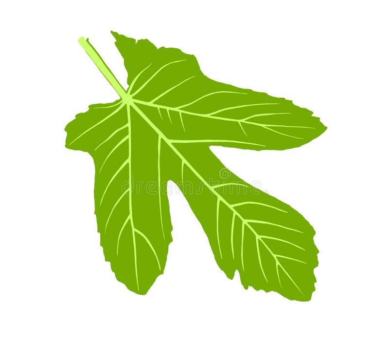 Arbre de vert de nature de jardin de feuille de figue photographie stock