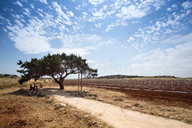 Download Arbre Des Souhaits En Chypre Image stock - Image du cyprus, nuageux: 56480803