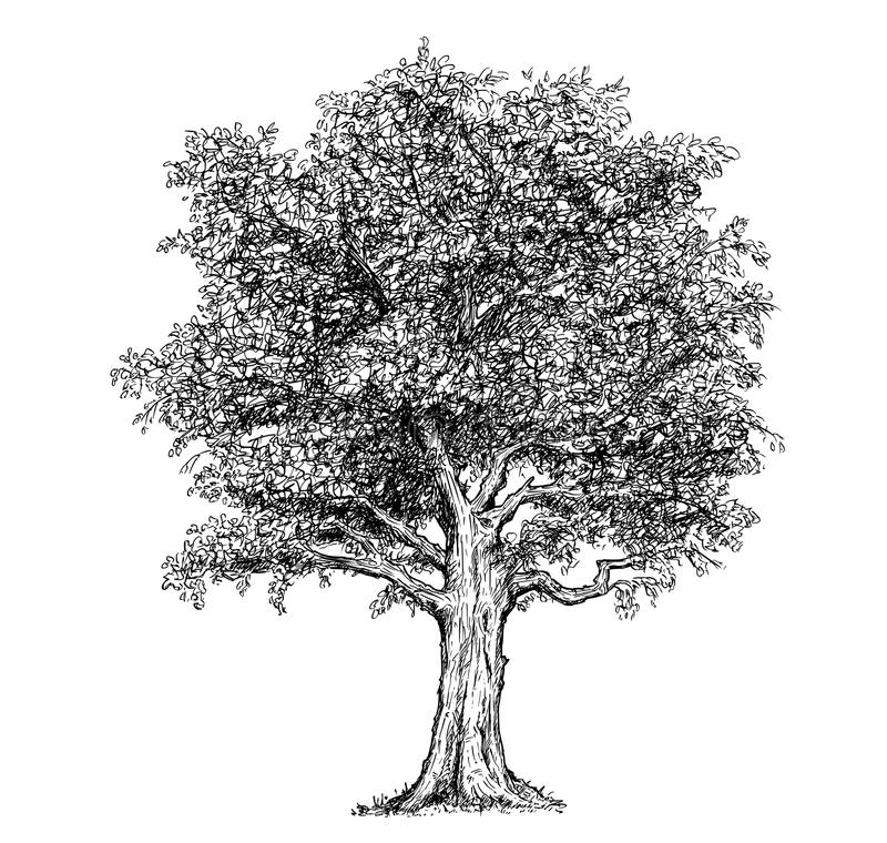Arbre dessiné par dessin de main de vecteur illustration libre de droits