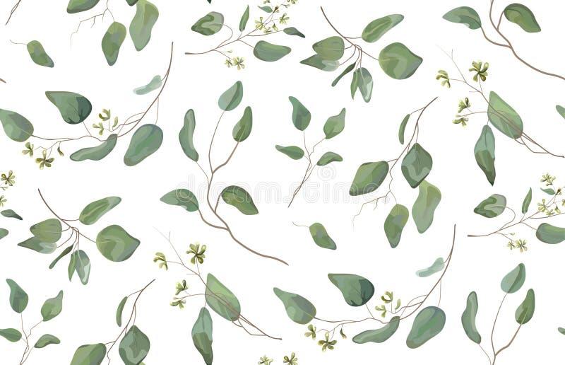 Arbre différent d'eucalyptus, branches naturelles de feuillage illustration libre de droits
