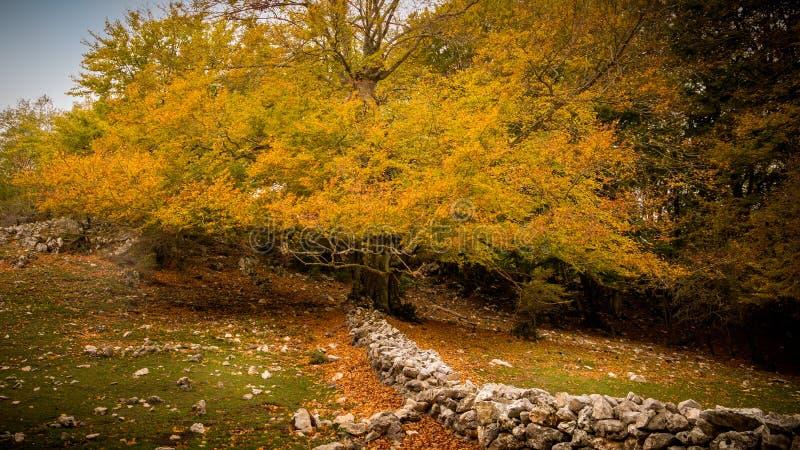 Arbre en automne photo libre de droits
