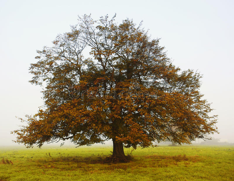 Arbre en automne photos libres de droits