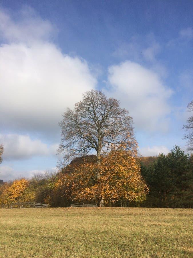 Arbre en automne - moitié-moitié avec des feuilles images libres de droits