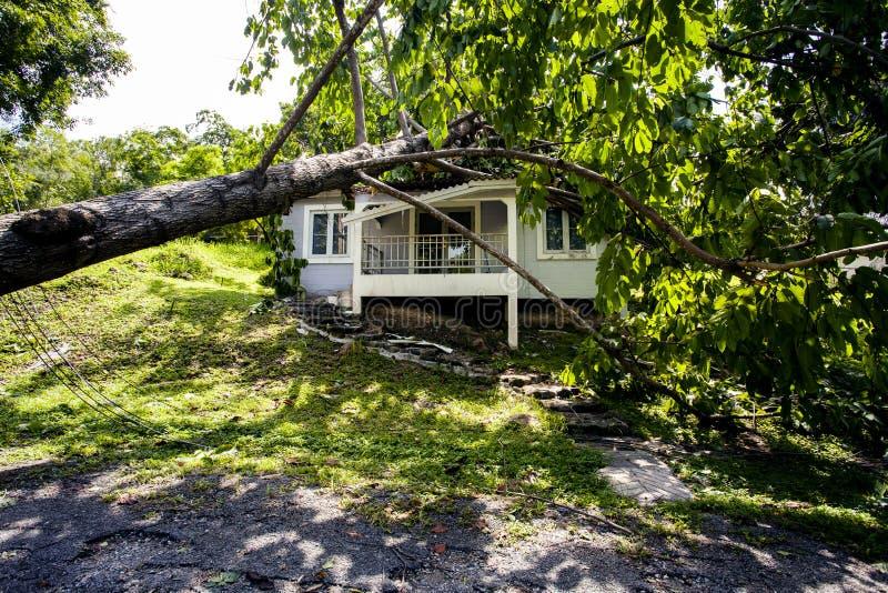 Arbre en baisse après tempête dure sur la maison de dommages photographie stock