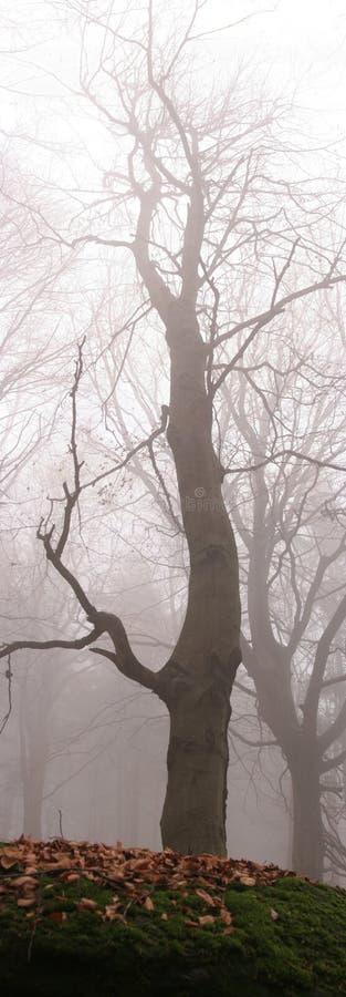 Arbre en bois brumeux images stock
