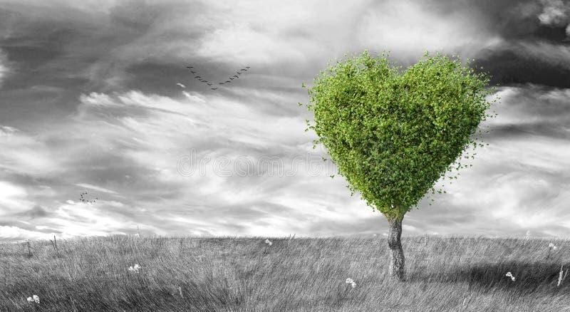 Arbre en forme de coeur vert sur le fond aménagé en parc noir et blanc photos stock