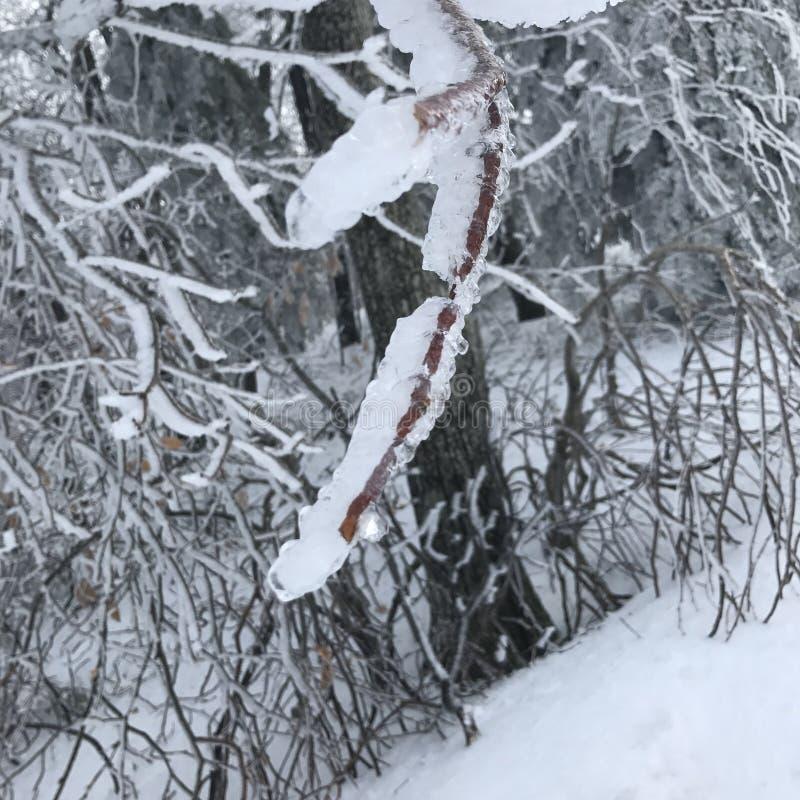 Arbre en hiver images libres de droits