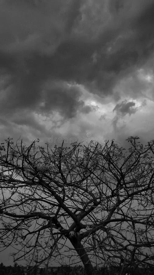 Arbre en silhouette pendant la journée nuageuse photos libres de droits