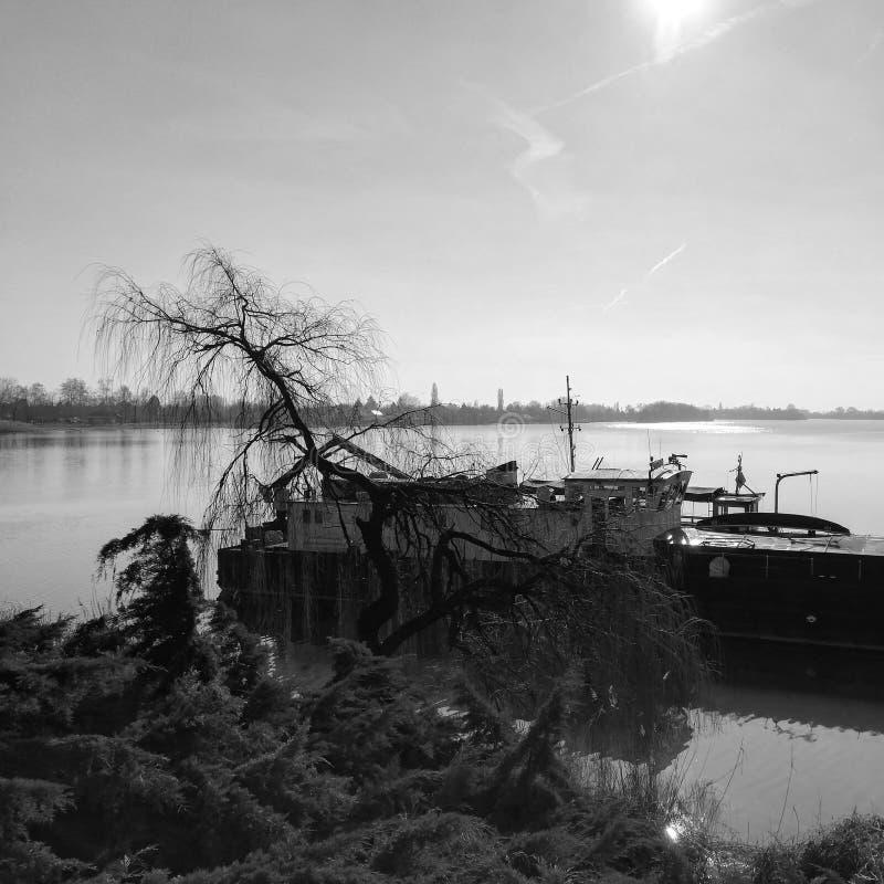 Arbre et bateau photos libres de droits