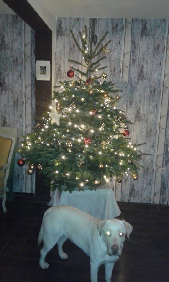 Arbre et chien de Noël image stock