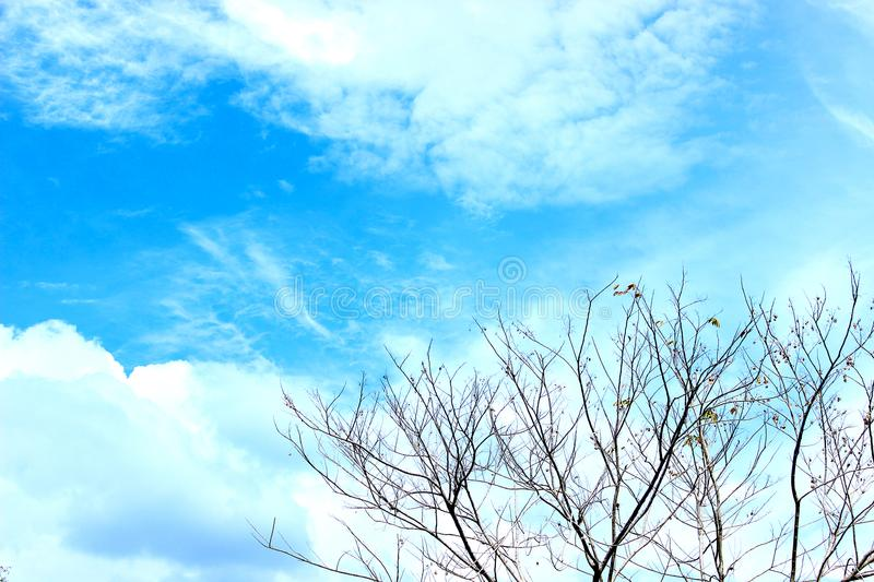 Arbre et ciel photo stock